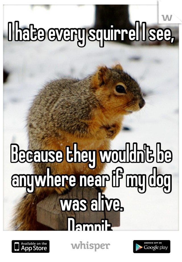 I hate every squirrel I see,      Because they wouldn't be anywhere near if my dog was alive. Damnit.