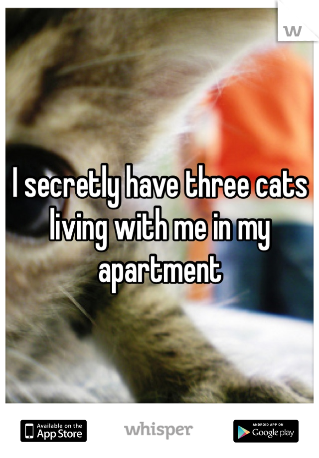 I secretly have three cats living with me in my apartment