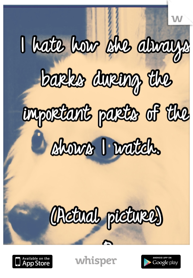 I hate how she always barks during the important parts of the shows I watch.  (Actual picture) :P