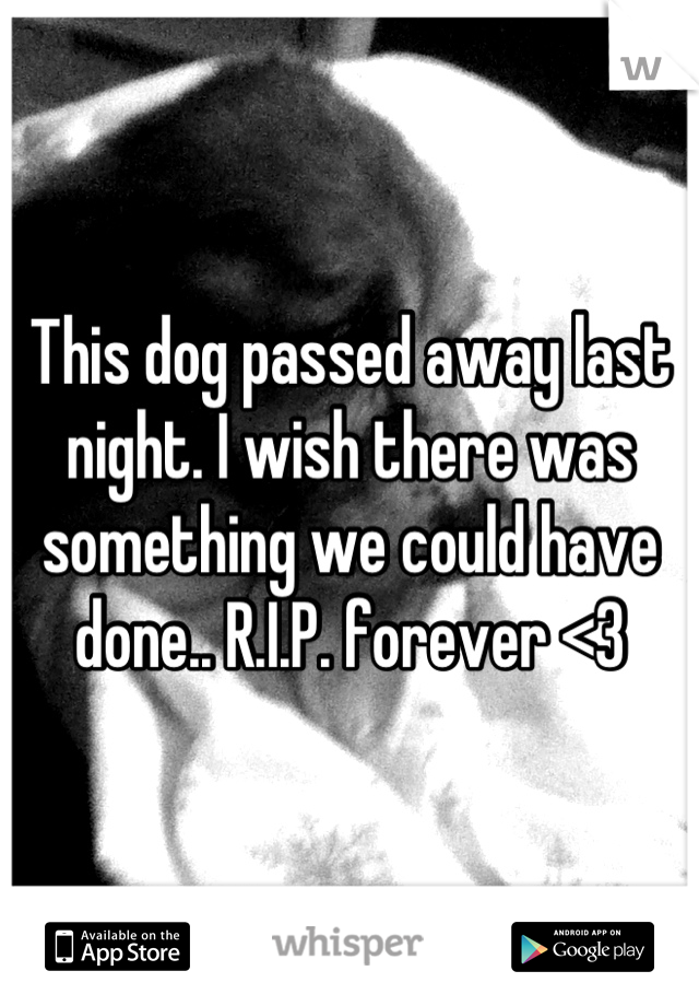 This dog passed away last night. I wish there was something we could have done.. R.I.P. forever <3