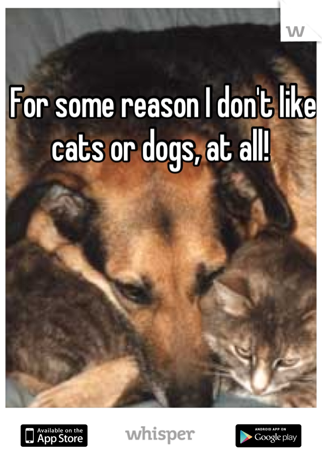 For some reason I don't like cats or dogs, at all!