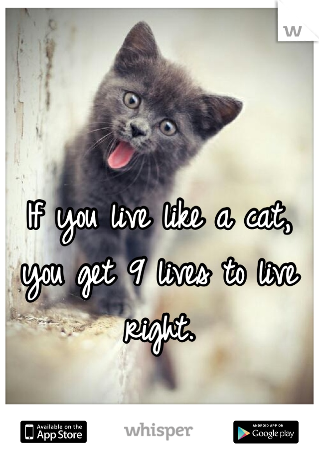 If you live like a cat, you get 9 lives to live right.