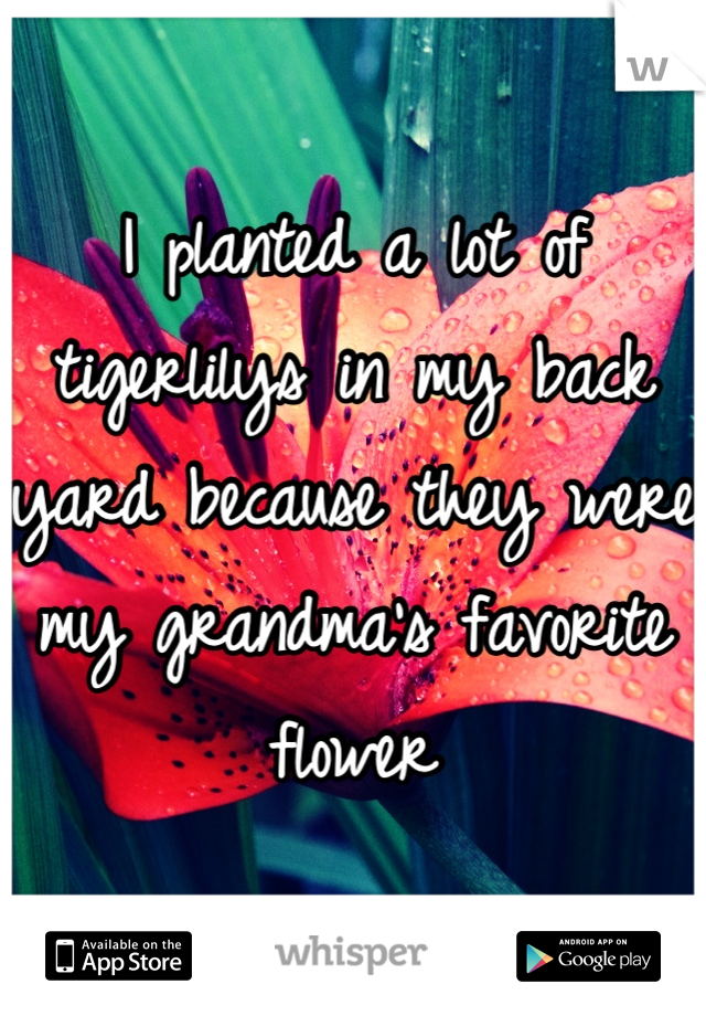 I planted a lot of tigerlilys in my back yard because they were my grandma's favorite flower