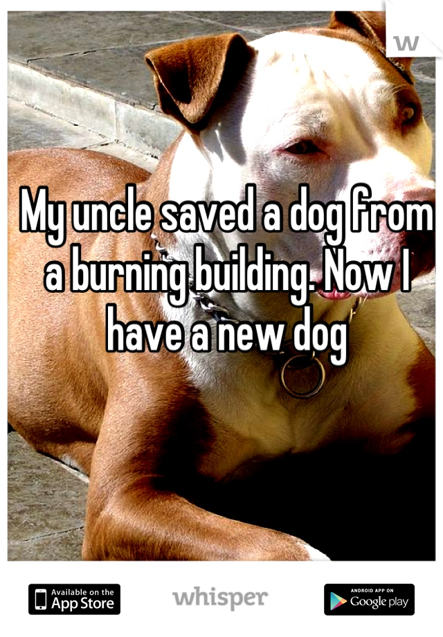 My uncle saved a dog from a burning building. Now I have a new dog
