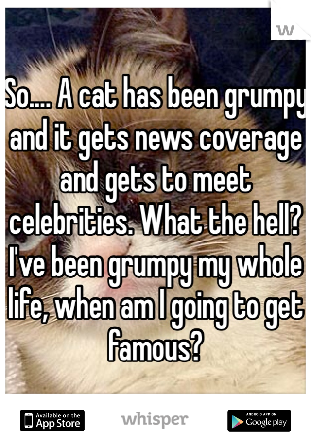 So.... A cat has been grumpy and it gets news coverage and gets to meet celebrities. What the hell? I've been grumpy my whole life, when am I going to get famous?