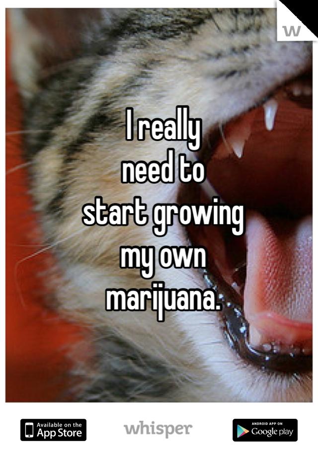 I really  need to  start growing  my own  marijuana.
