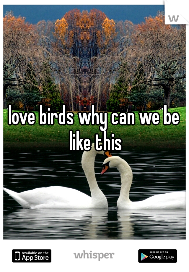 love birds why can we be like this