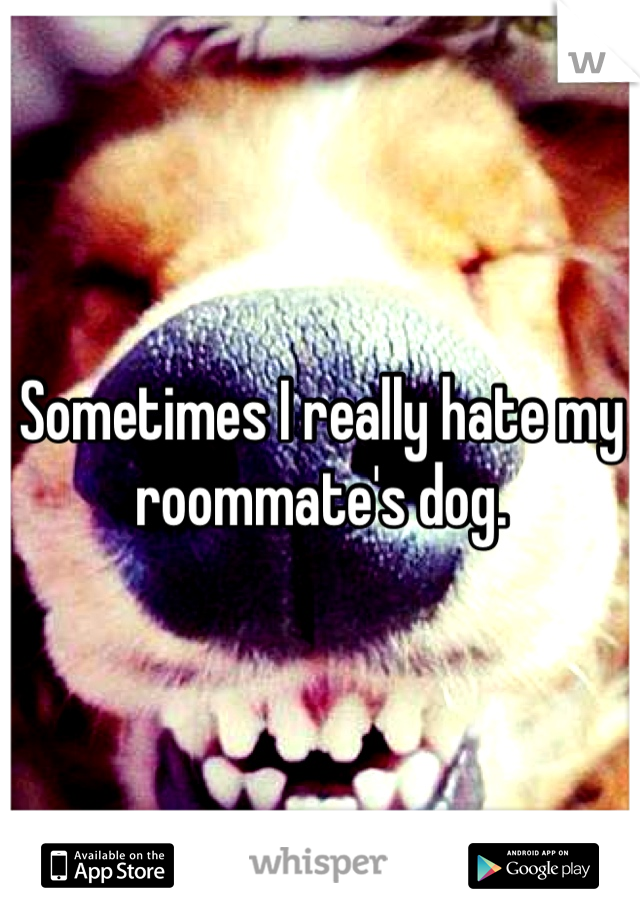 Sometimes I really hate my roommate's dog.