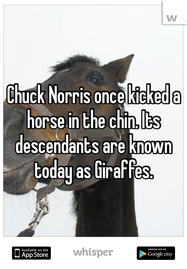 Chuck Norris once kicked a horse in the chin. Its descendants are known today as Giraffes.