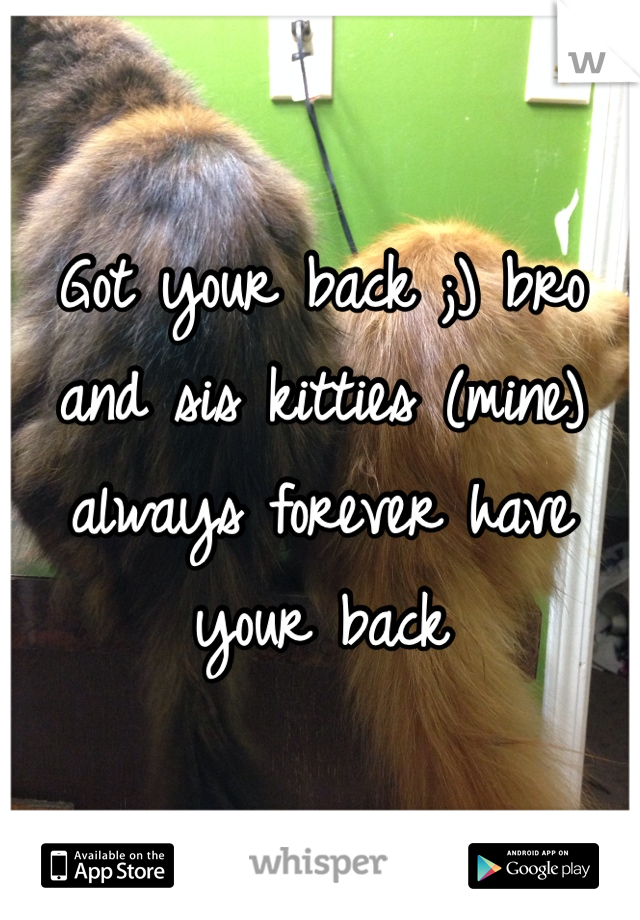 Got your back ;) bro and sis kitties (mine) always forever have your back