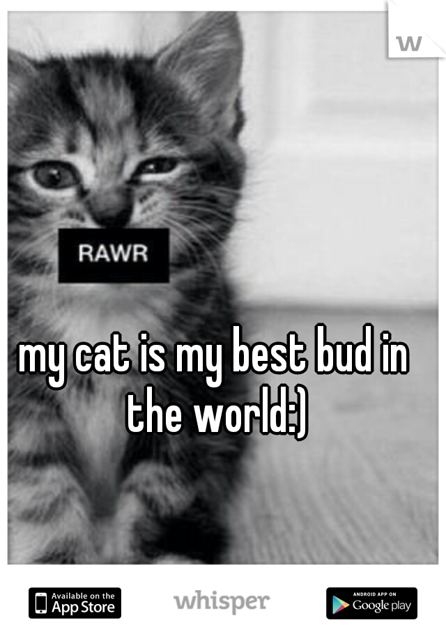 my cat is my best bud in the world:)