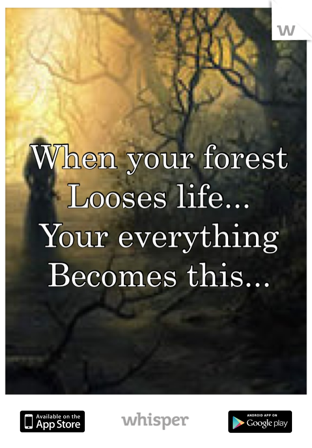 When your forest Looses life...  Your everything  Becomes this...
