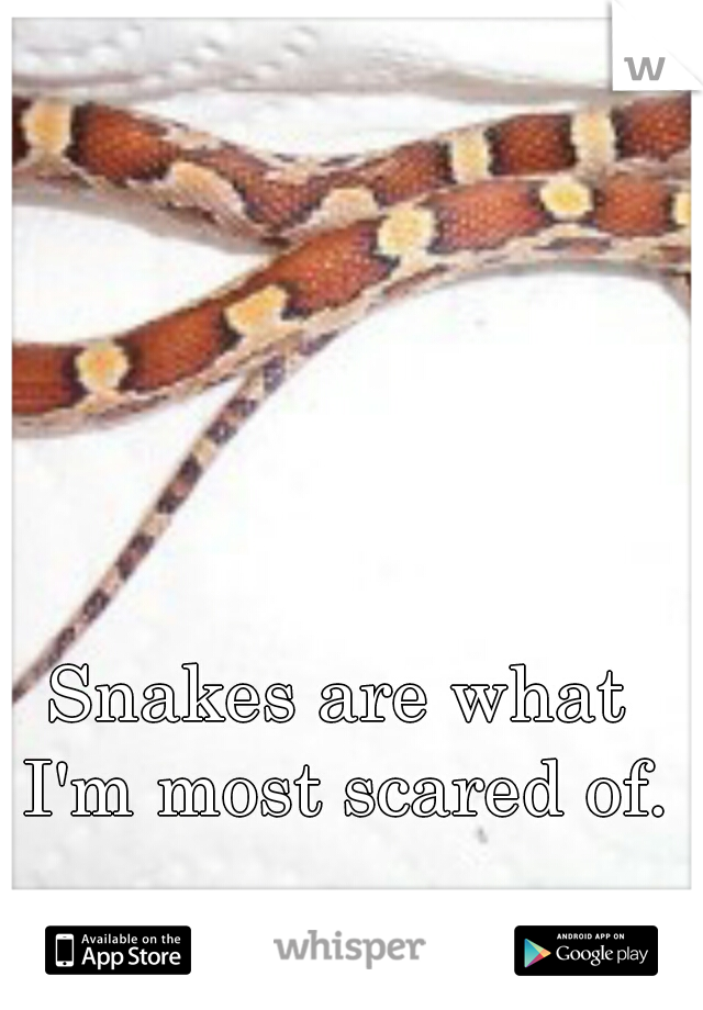Snakes are what I'm most scared of.