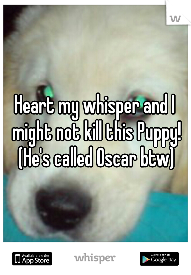 Heart my whisper and I might not kill this Puppy! (He's called Oscar btw)