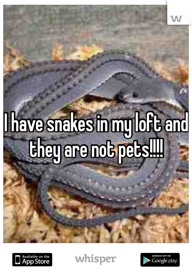 I have snakes in my loft and they are not pets!!!!