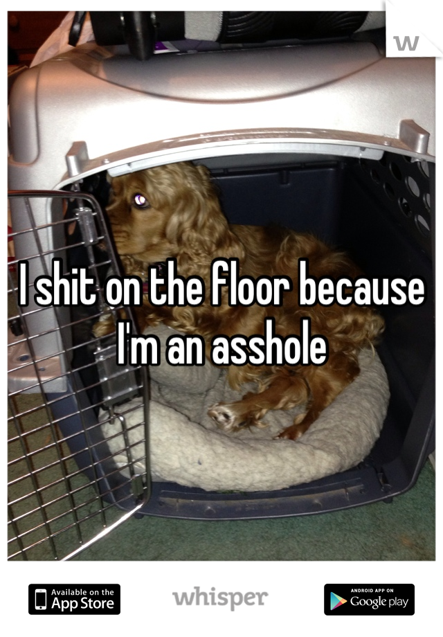 I shit on the floor because I'm an asshole