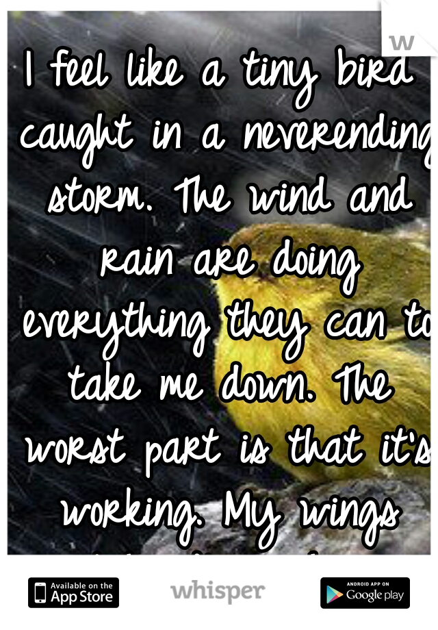 I feel like a tiny bird caught in a neverending storm. The wind and rain are doing everything they can to take me down. The worst part is that it's working. My wings can't handle much more.