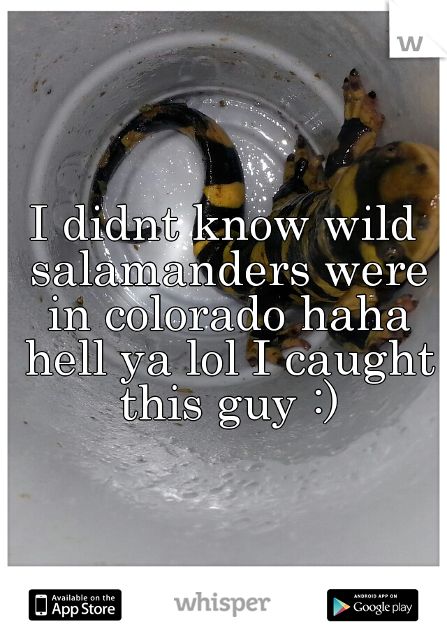 I didnt know wild salamanders were in colorado haha hell ya lol I caught this guy :)