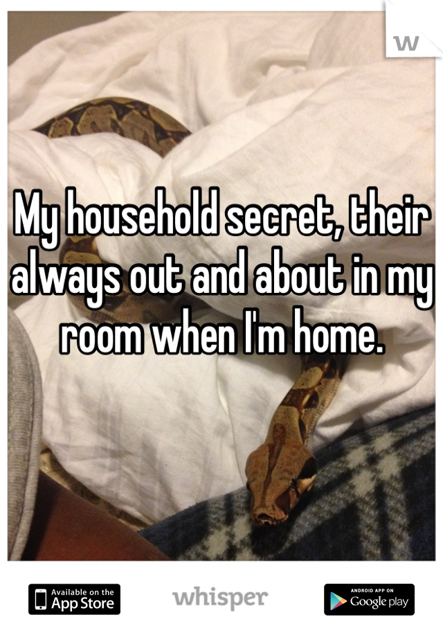 My household secret, their always out and about in my room when I'm home.