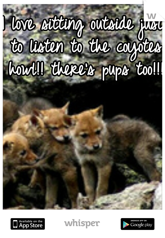I love sitting outside just to listen to the coyotes howl!! there's pups too!!!!