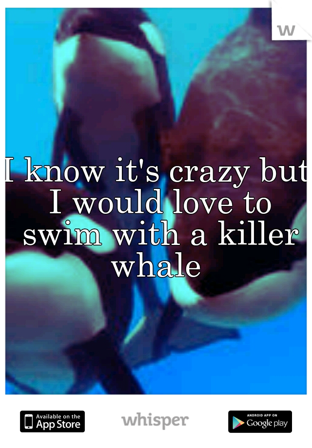 I know it's crazy but I would love to swim with a killer whale