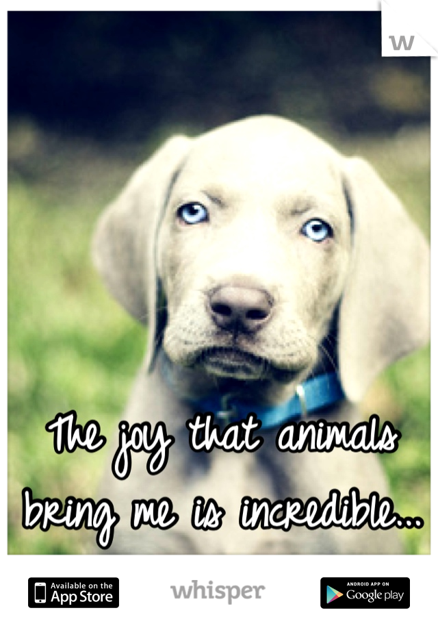 The joy that animals bring me is incredible...