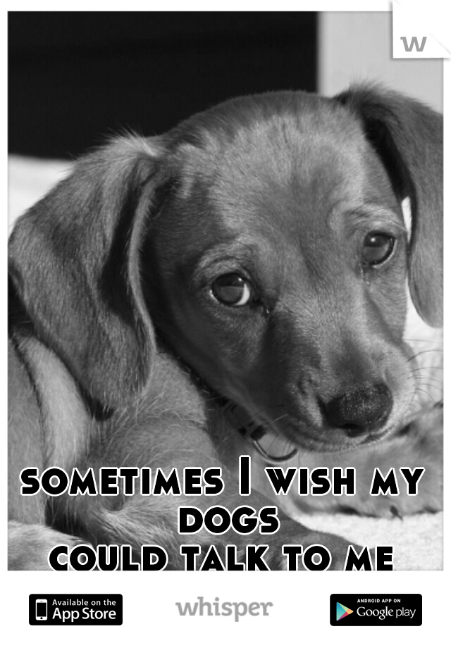 sometimes I wish my dogs could talk to me