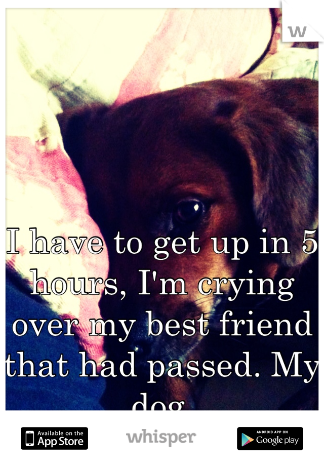 I have to get up in 5 hours, I'm crying over my best friend that had passed. My dog.