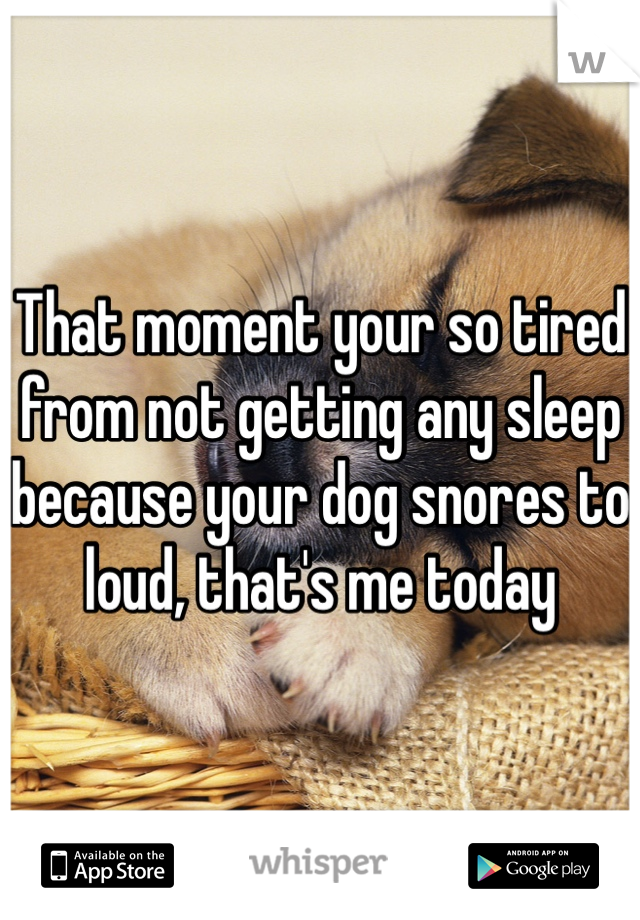 That moment your so tired from not getting any sleep because your dog snores to loud, that's me today