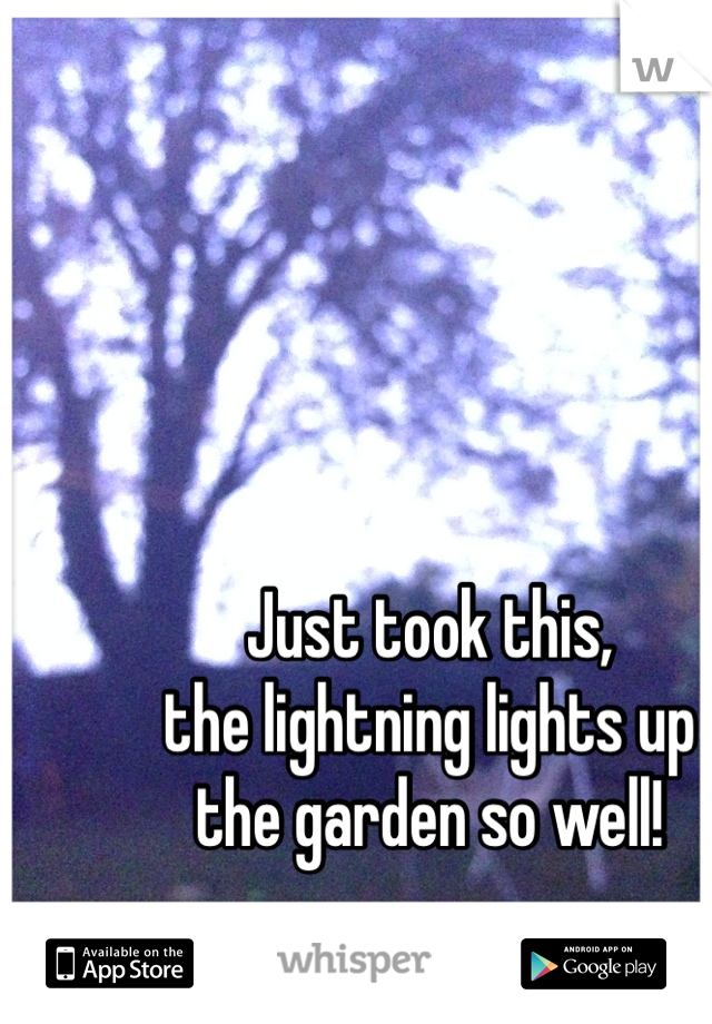 Just took this, the lightning lights up the garden so well!