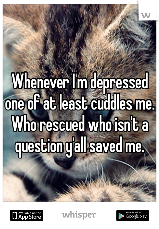 Whenever I'm depressed one of at least cuddles me. Who rescued who isn't a question y'all saved me.