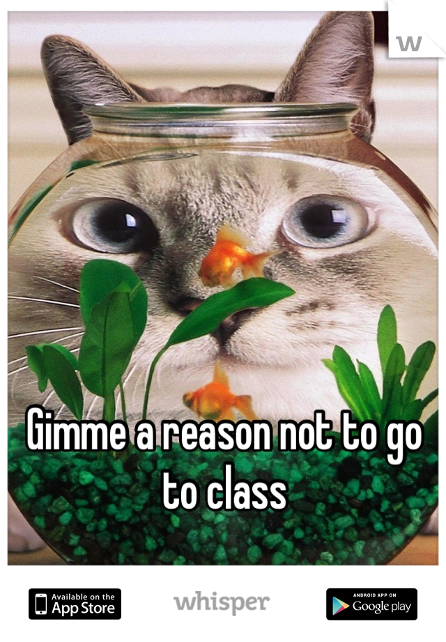Gimme a reason not to go to class