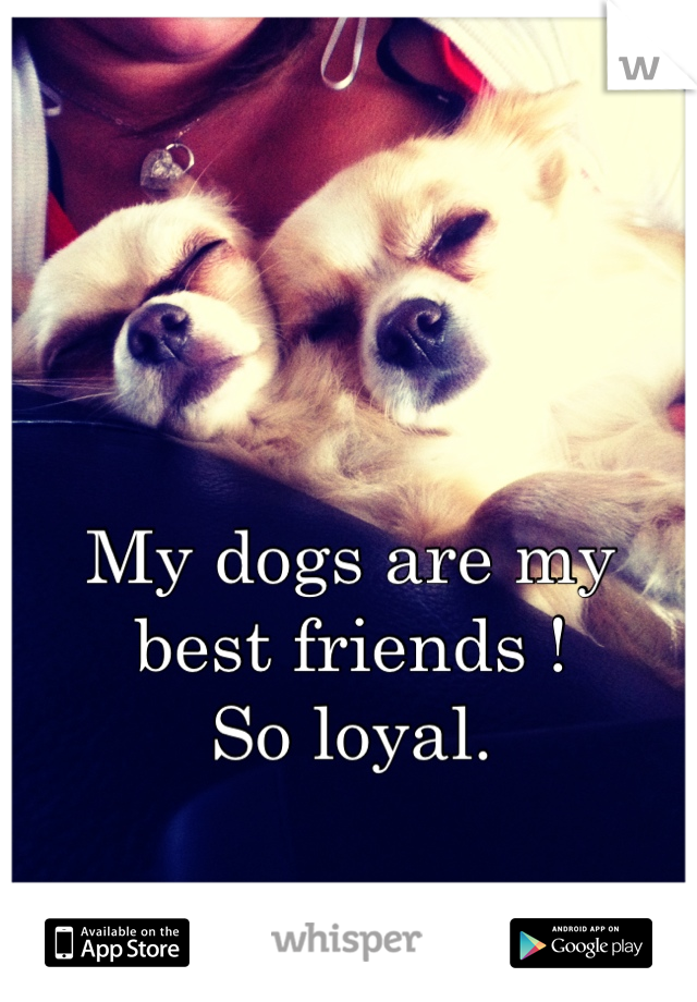 My dogs are my best friends ! So loyal.