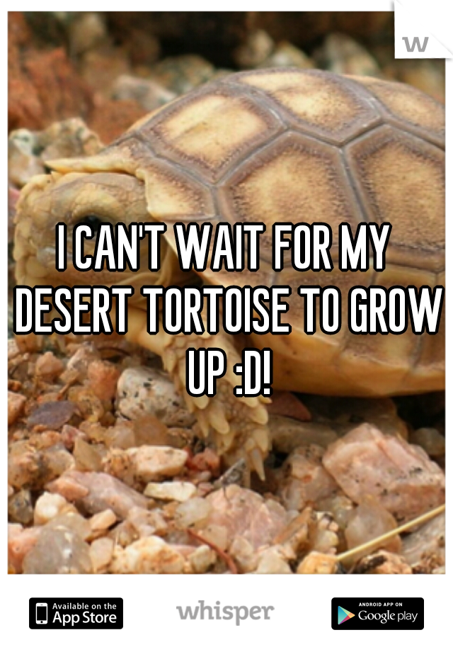 I CAN'T WAIT FOR MY DESERT TORTOISE TO GROW UP :D!