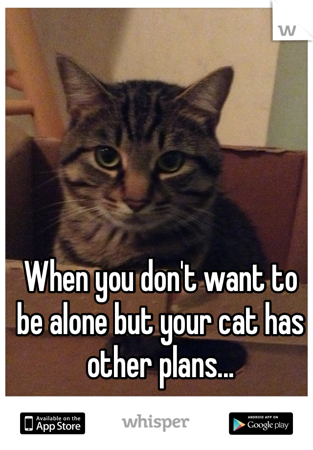 When you don't want to be alone but your cat has other plans...