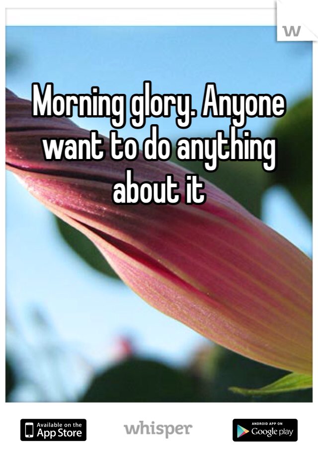 Morning glory. Anyone want to do anything about it