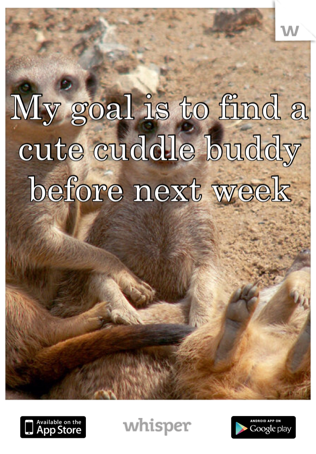 My goal is to find a cute cuddle buddy before next week
