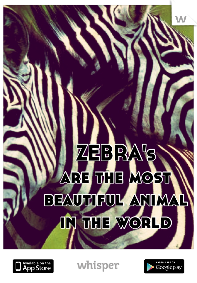 ZEBRA's are the most  beautiful animal in the world