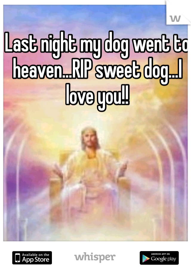 Last night my dog went to heaven...RIP sweet dog...I love you!!