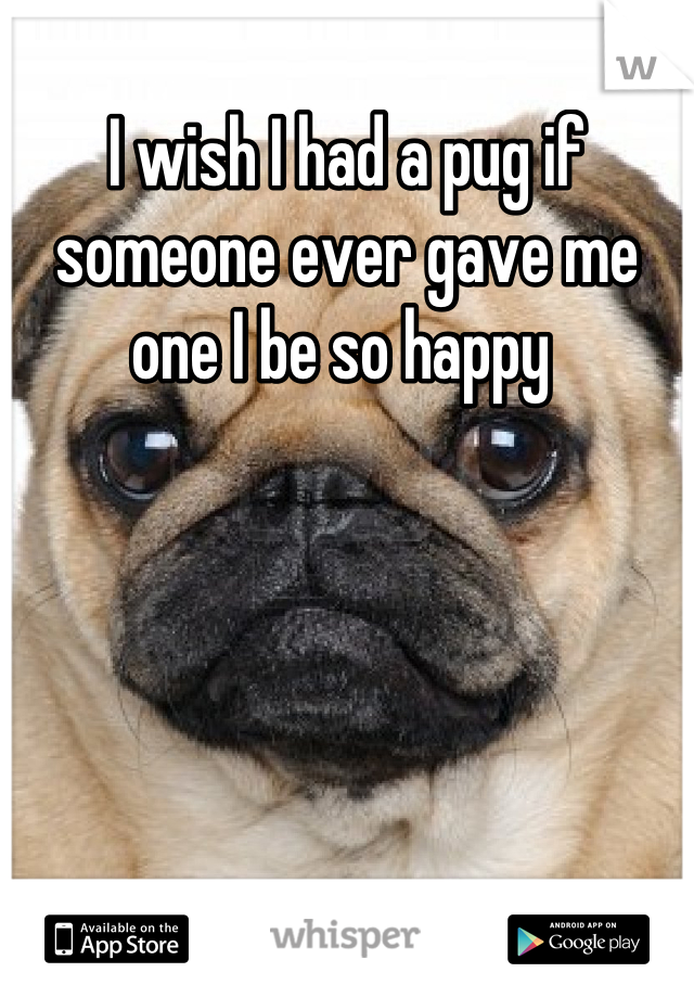 I wish I had a pug if someone ever gave me one I be so happy