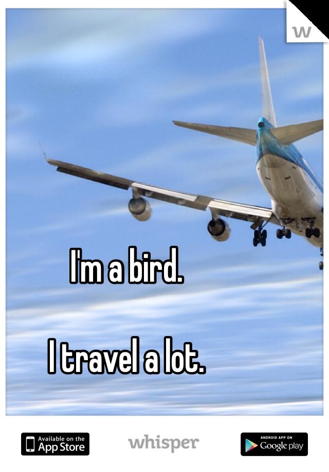 I'm a bird.  I travel a lot.