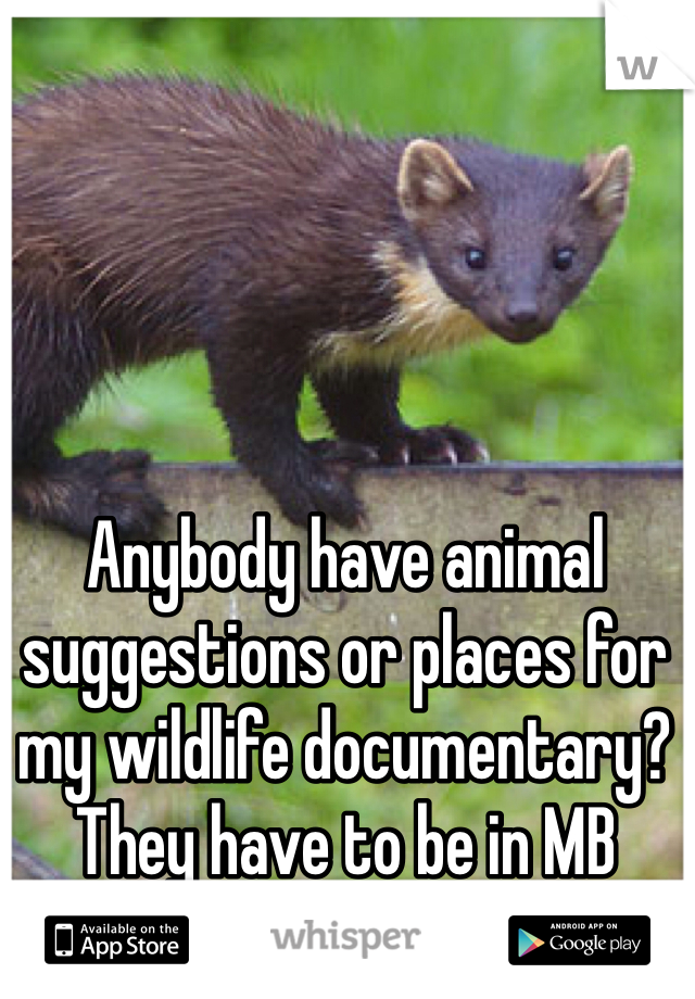 Anybody have animal suggestions or places for my wildlife documentary?  They have to be in MB