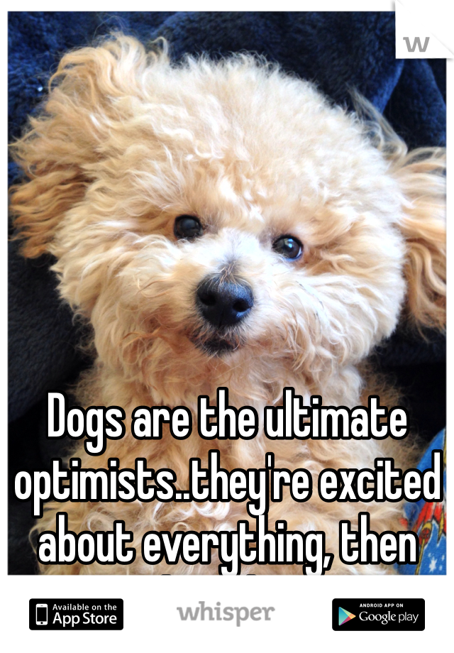 Dogs are the ultimate optimists..they're excited about everything, then they sleep