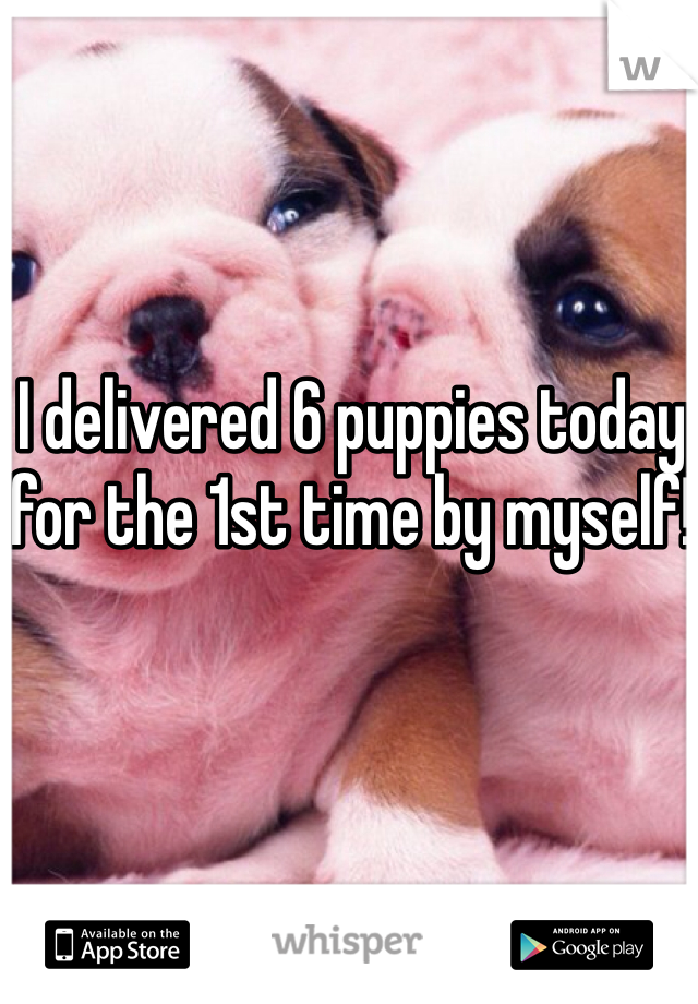 I delivered 6 puppies today for the 1st time by myself!