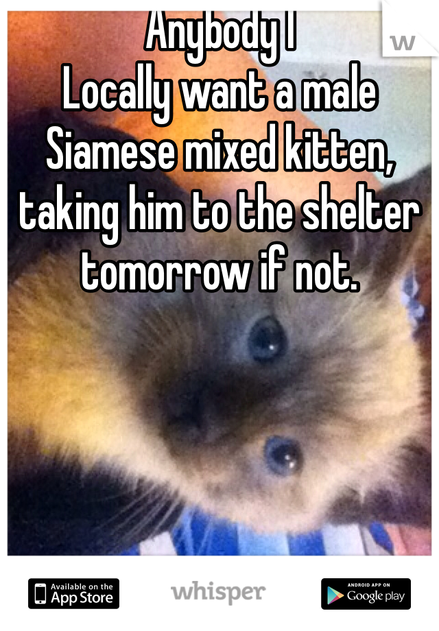 Anybody I Locally want a male Siamese mixed kitten, taking him to the shelter tomorrow if not.
