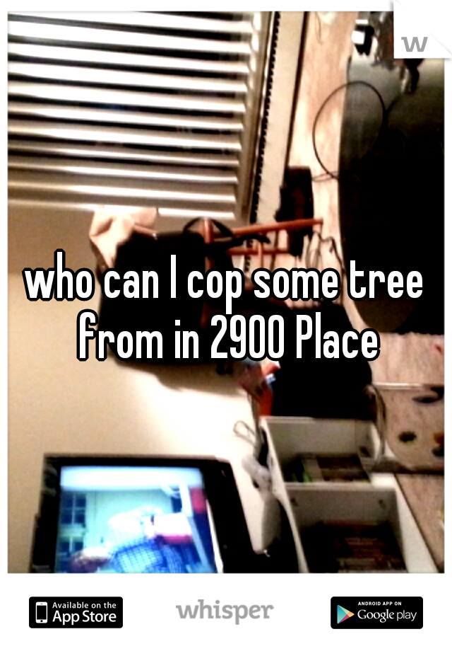 who can I cop some tree from in 2900 Place