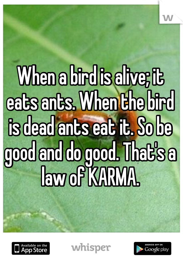 When a bird is alive; it eats ants. When the bird is dead ants eat it. So be good and do good. That's a law of KARMA.
