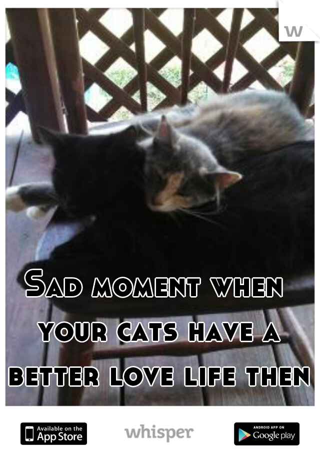 Sad moment when your cats have a better love life then you.