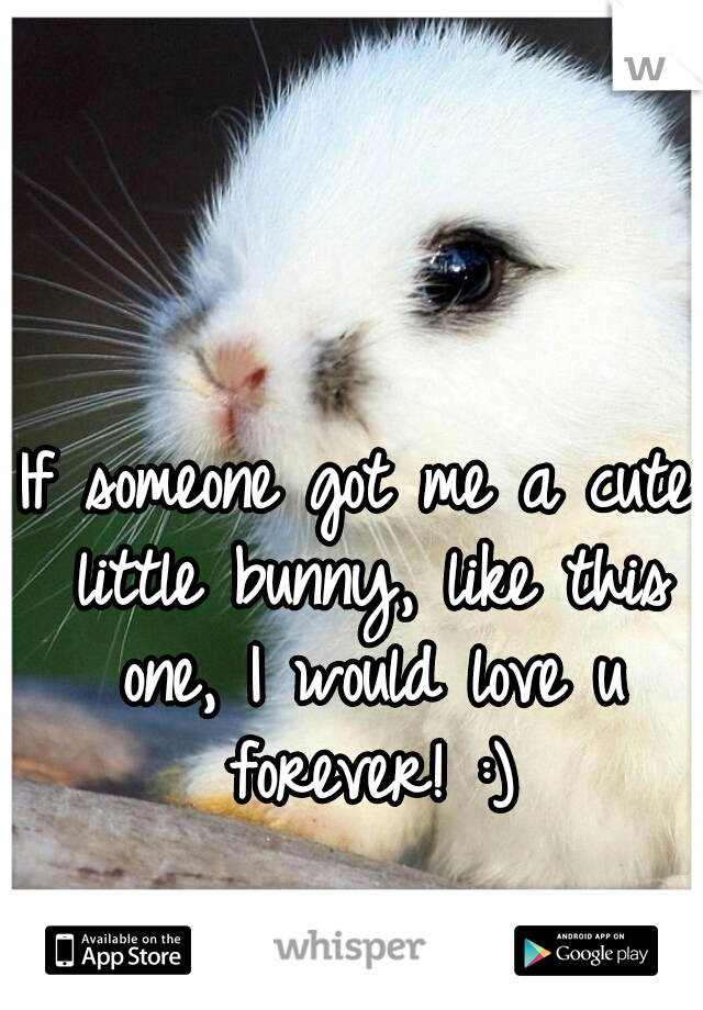 If someone got me a cute little bunny, like this one, I would love u forever! :)