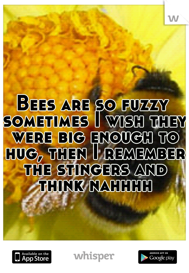 Bees are so fuzzy sometimes I wish they were big enough to hug, then I remember the stingers and think nahhhh